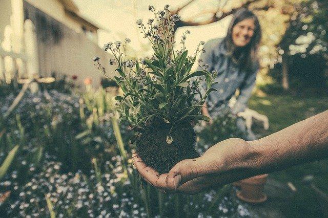 Градинарството ги лекува луѓето од депресија!