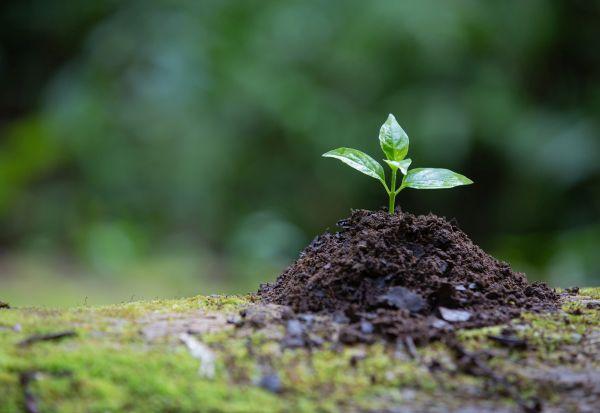 Дали Етиопија навистина успеа да засади 350 милиони дрвја за еден ден?