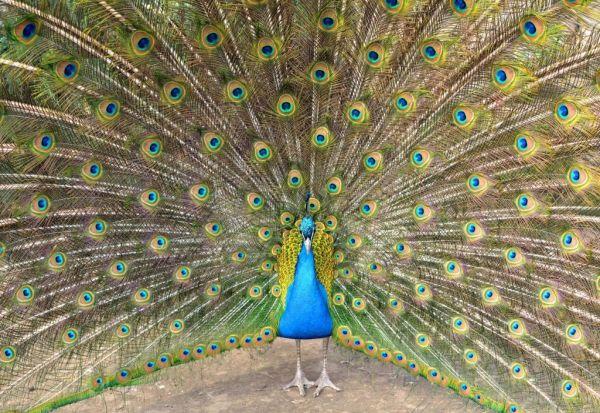 Слепите луѓе знаат за изгледот на животните повеќе отколку што мислиме