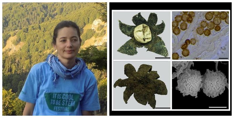 Astraeus macedonicus – откриен нов вид габа од Македонија