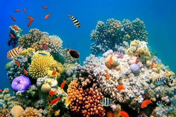 3Д-печатени корали може да бидат спас за рибите
