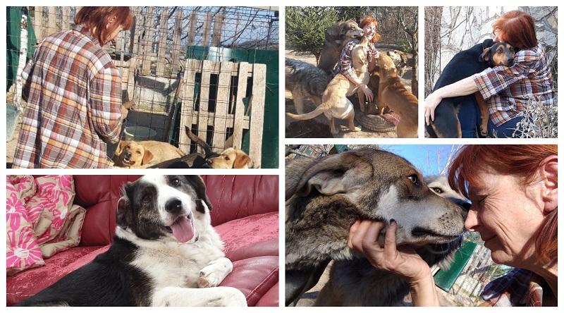 Кучињата што никој не ги сака тука, Тања и Вики ги носат во САД. Им нашле дом на повеќе од 20