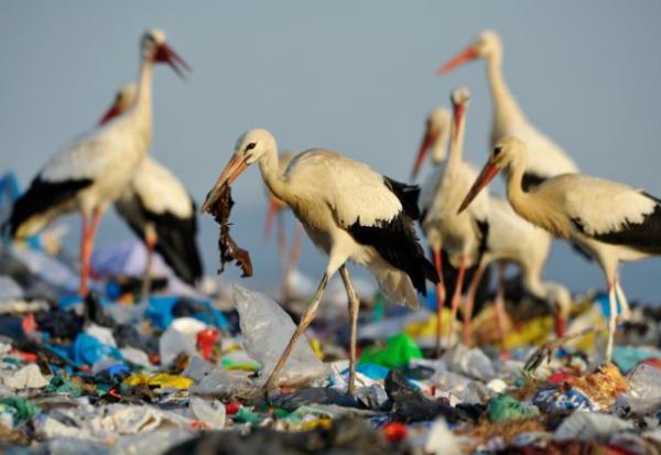 Зошто океанските животни јадат пластика?