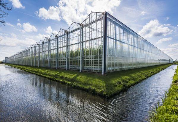 Холанѓаните со паметен дизајн на оранжерии го хранат целиот свет