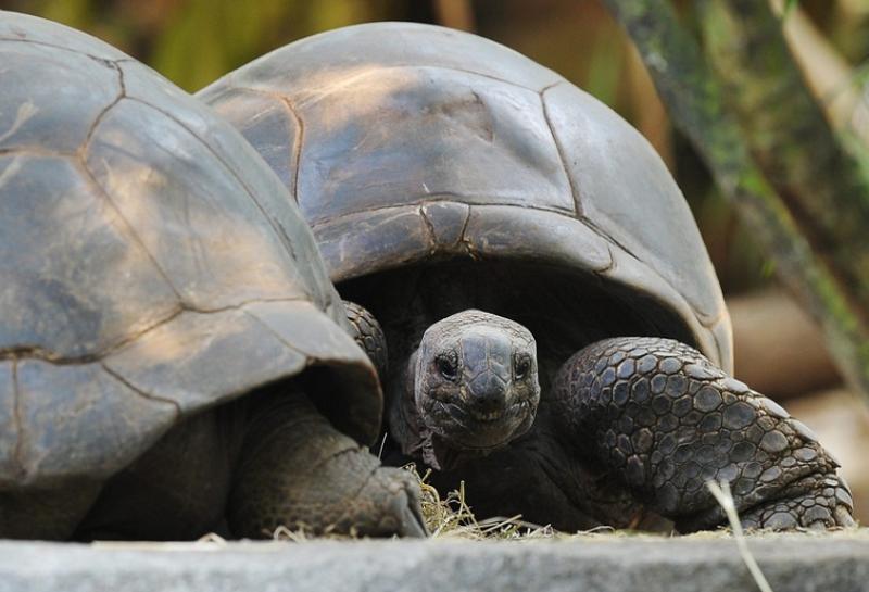 Пронајдени фосили од желка со големина на автомобил