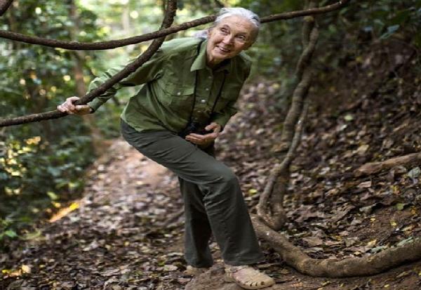 Експертот за шимпанза Џејн Гудал вети дека ќе засади 5 милиони дрвја во 2020 година
