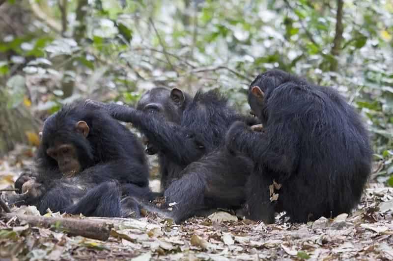 И некои видови животни практикуваат социјално дистанцирање