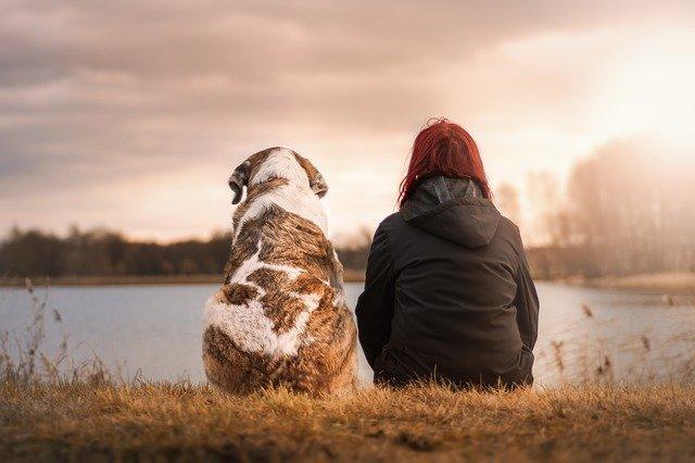 Нова студија открива колку човечки години има едно куче