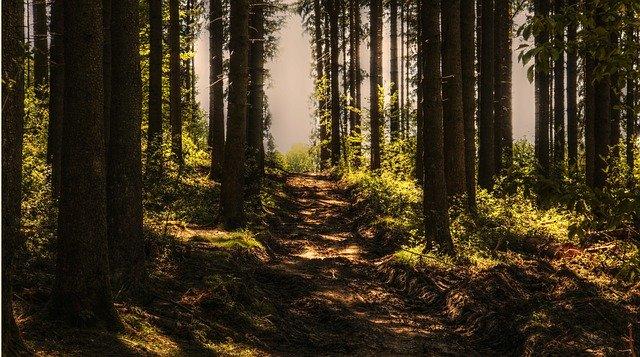 Дали садењето големи шуми може да биде штетно?