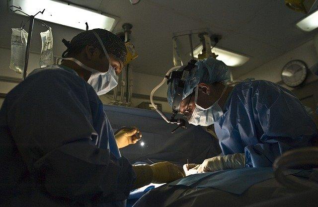Лекари одржуваат во живот човечки бели дробови прикачени на живи свињи