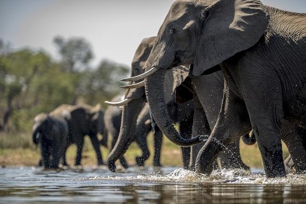 Во светот има околу 68% помалку диви животни отколку во 1970
