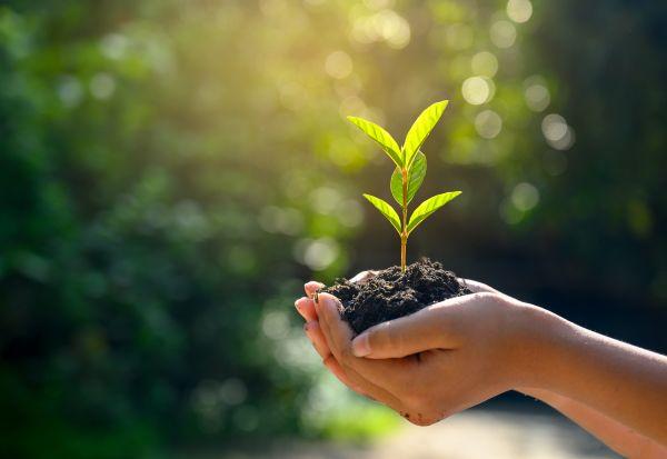Засадувањето неколку растенија во дворот може значително да го намали нивото на стрес