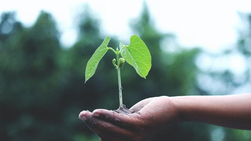Апликација им овозможува на луѓето да заработат преку одгледување дрвја