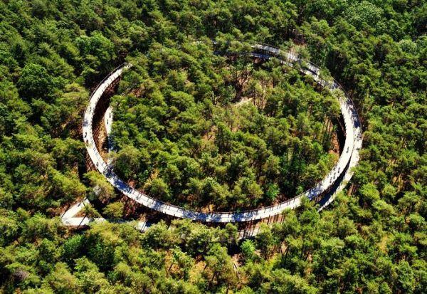 Велосипедска патека од 360 степени во Белгија - возење низ дрвја 10 метри над земјата