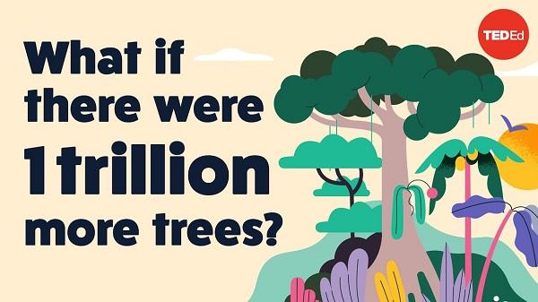 Што би се случило кога на светот би имало уште еден билион дрвја?