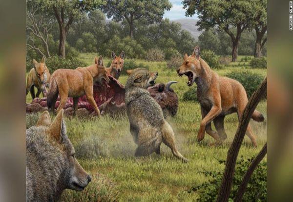"""Анализа на ДНК открива детали за изумрен вид волк, инспирација за стравоволците во """"Игра на троновите"""""""