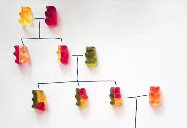 Научете како функционира генетиката со помош на овој едноставен експеримент со гумени бонбони