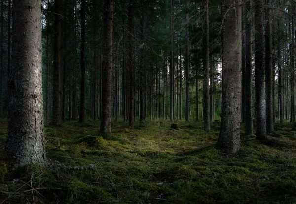 ИКЕА купи над 4.000 хектари шума со цел да ја заштити