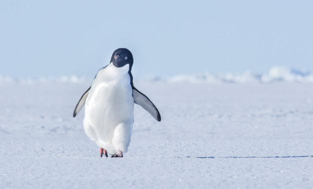 Застрашувачки предвидувања: Врнежите на Антарктикот драматично ќе се интензивираат во овој век