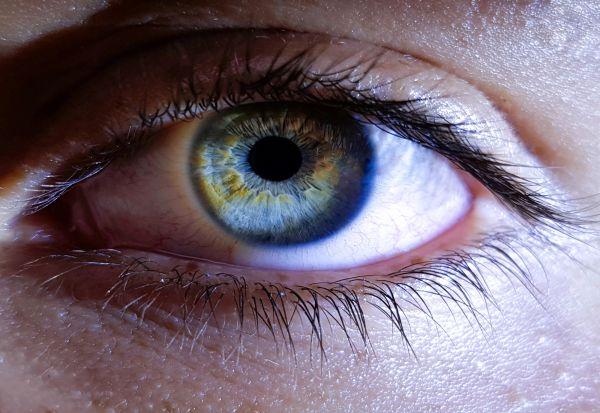Зошто луѓето немаат црни очи?