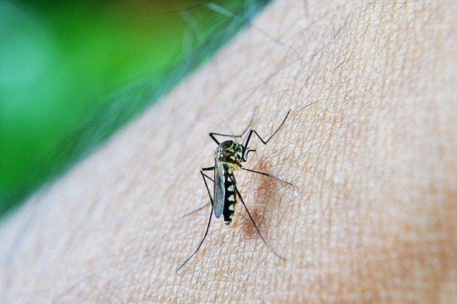 Волонтери се заразиле со маларија за да помогнат да се открие каде се крие во телото