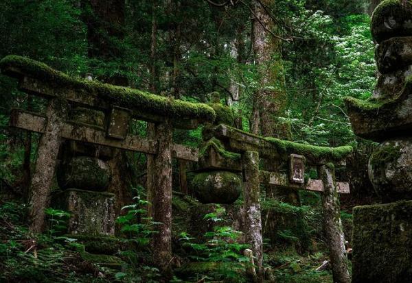 Јапонските гробишта на дрво стануваат популарна алтернатива